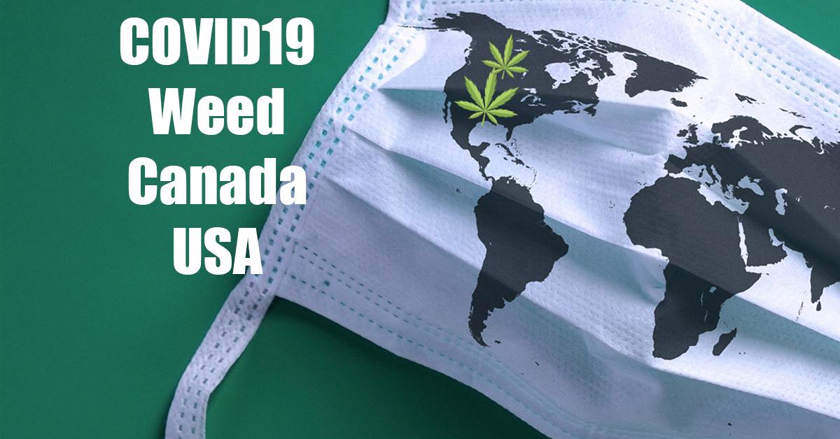 cannabis covid 19 usa and canada