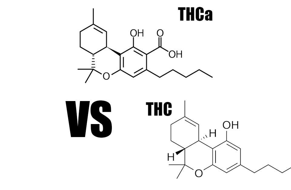 thca vs thc cannabinoid