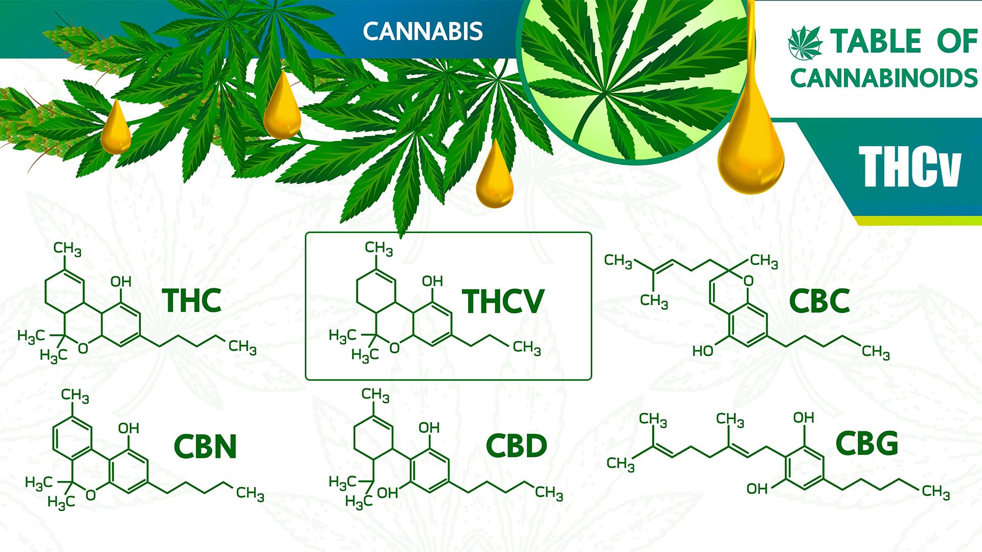 what is thcv cannabinoid
