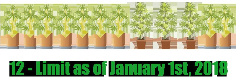 colorado weed laws growing plants limit
