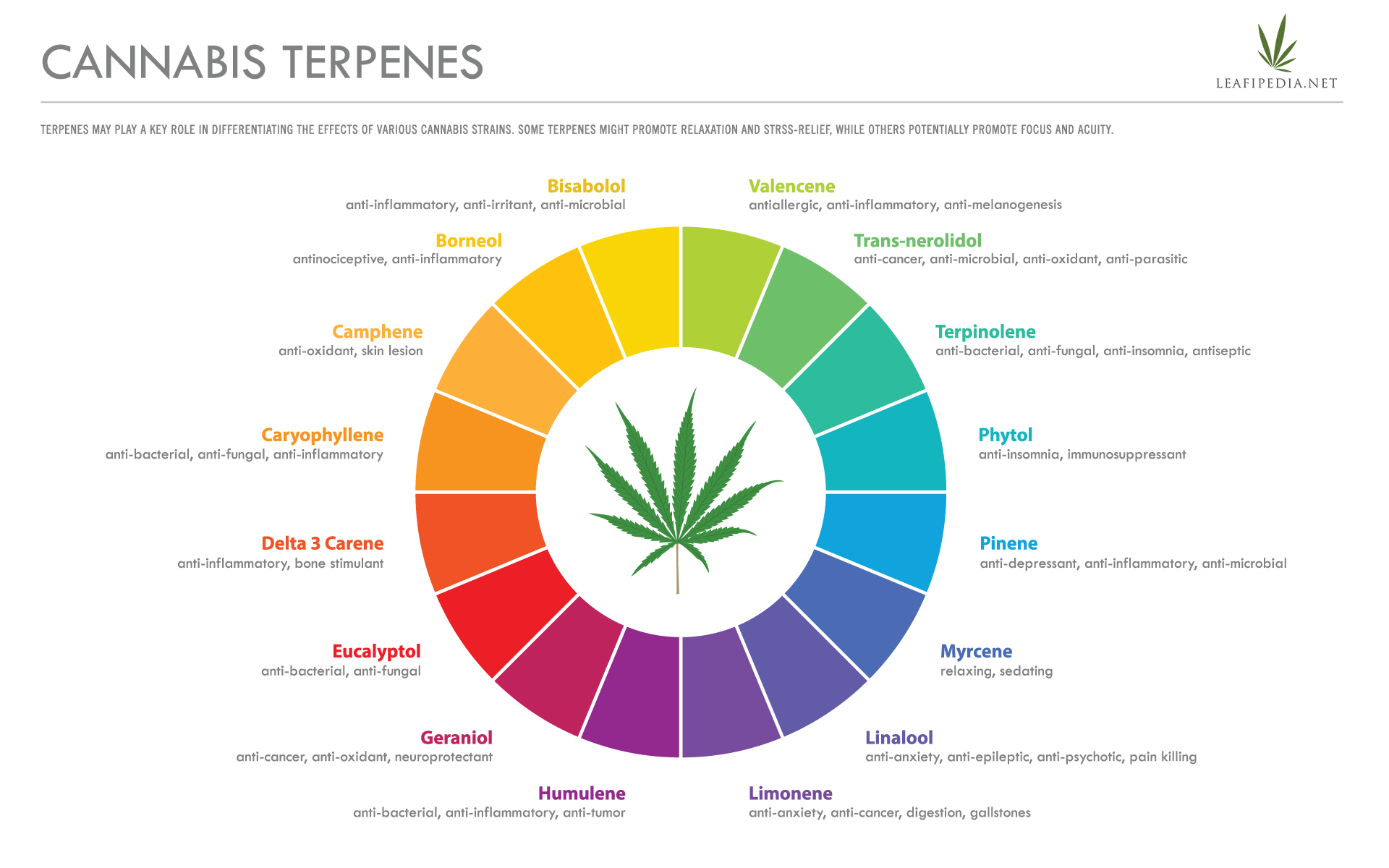 cannabis terpenes effects infographic
