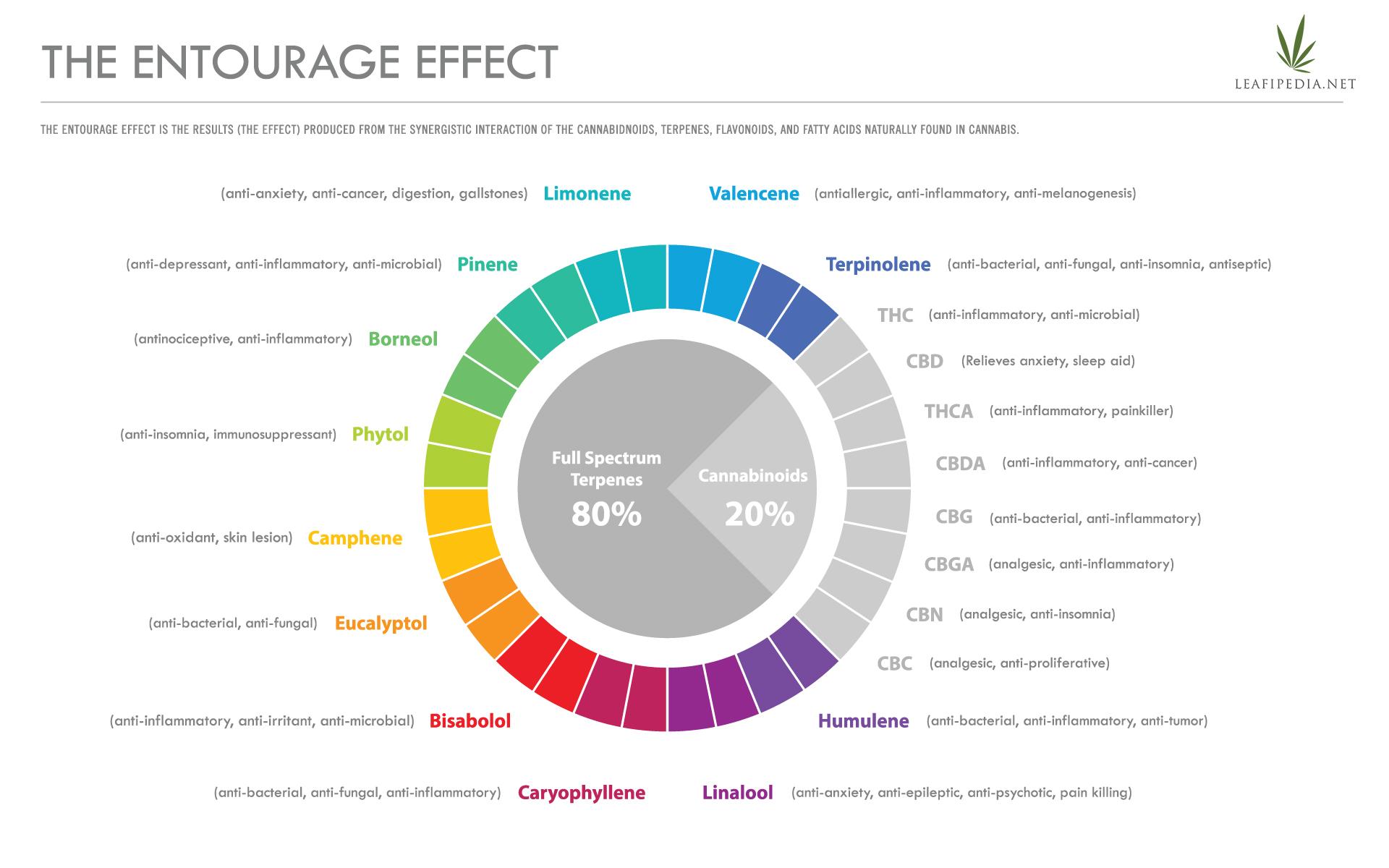 entourage effects explained infographic