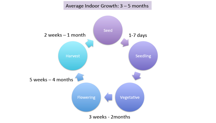 seed to harvest average time to indoor grow