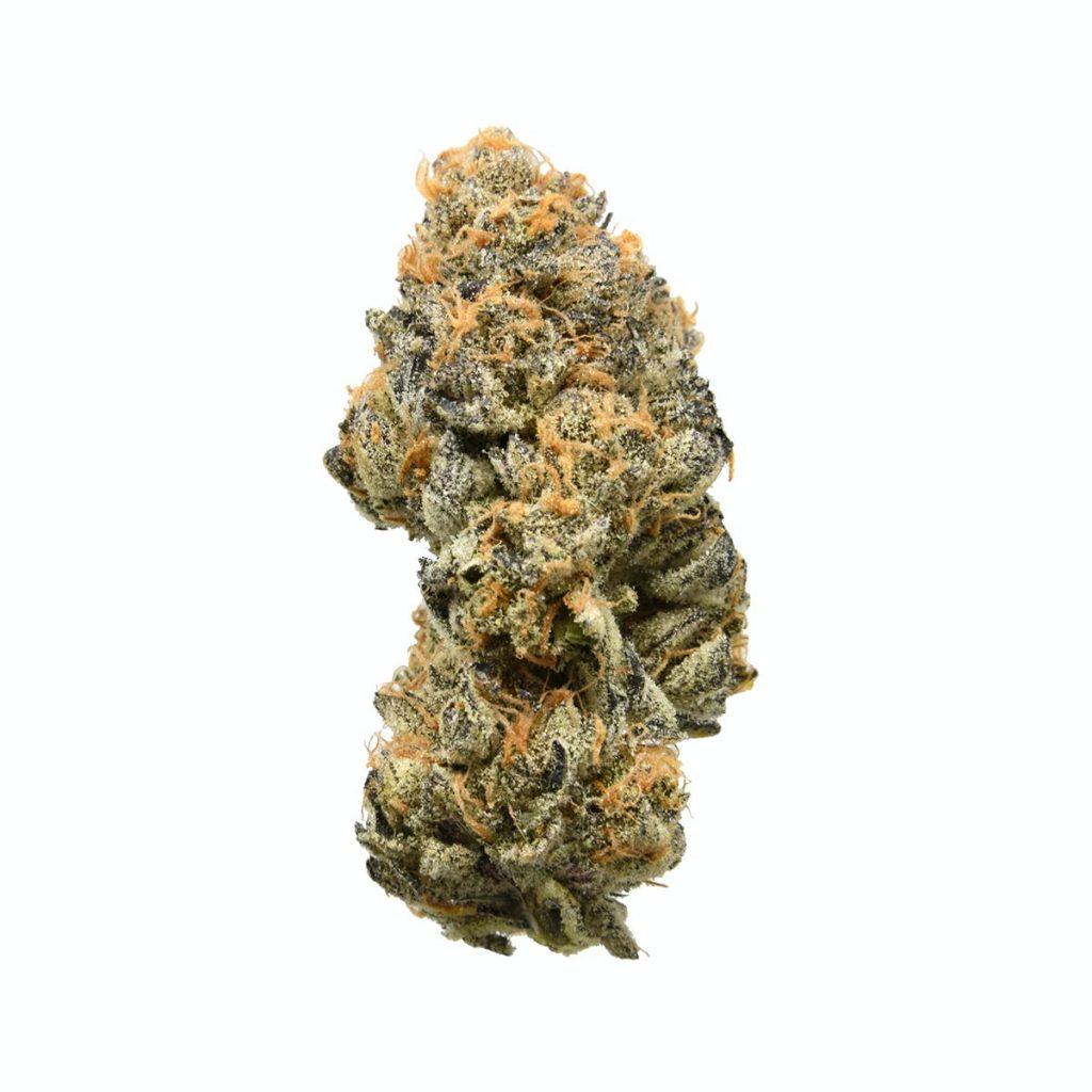 GSC strain