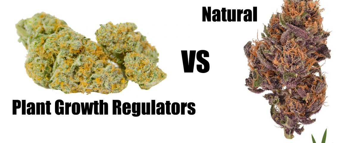 PGR weed vs natural
