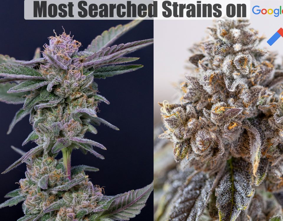 best marijuana strains in 2021